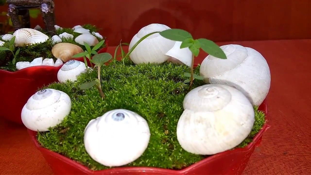 How To Grow Moss | Growing A Moss Garden | How To Make A Moss Pot | Growing  Moss For Bonsai