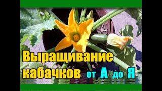 Выращивание кабачков от А до Я / Рассада кабачков