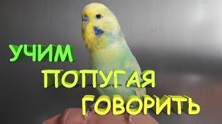 🎓 Как научить попугая говорить