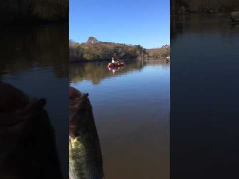 Cape Fear Largemouth bass
