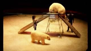 Фото-Видео-Фильм Цирка на Вернадского.