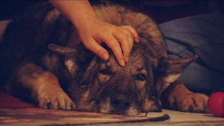 Bear Attack; Woman Defends Dog and Gets Mauled