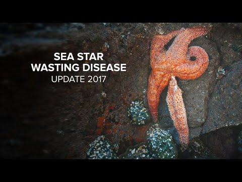 Sea Star Wasting Disease Update 2017