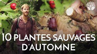 10_plantes_sauvages_a_cueillir_en_automne_