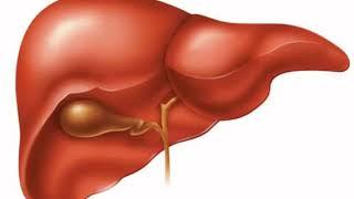Щелочная фосфатаза в крови – обозначение, нормы, что показывает?