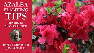 Azalea Planting Tips - Season by Season Advice