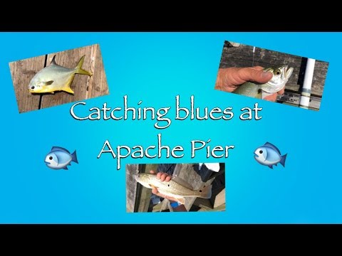 Catching Blues At Apache Pier