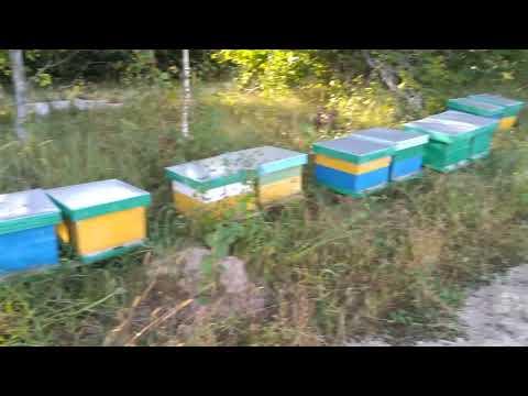 Маленькая хитрость при кармлении пчел открытым способам.