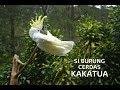 Si Burung Cerdas Aksinya Di Alam Bebas  Mp3 - Mp4 Download