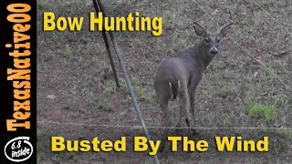 White Tail Deer Hunting - Busted by the Wind