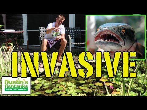 ILLEGAL Aquarium Fish And Plants (INVASIVE TOP 5)