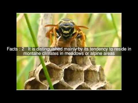 Bộ sưu tập côn trùng 2 - Page 12 Hqdefault