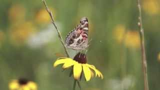 Bring pollinators to your farm with conservation