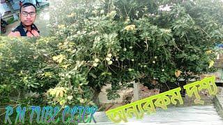 Amader Barir Beautiful Video   আমাদের বাড়ির সুন্দর দৃশ্য   R M TUBE CLICK RECORD