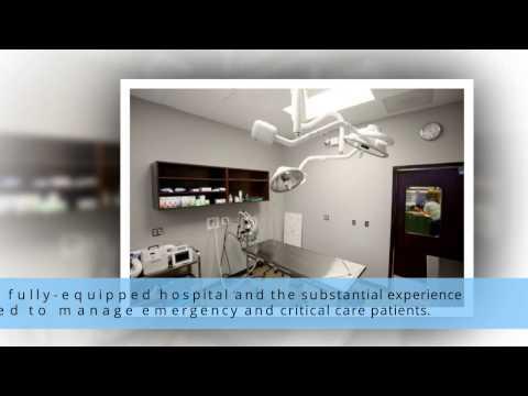 Chicago's Trusted Veterinary Hospital - Metropolitan Veterinary Center