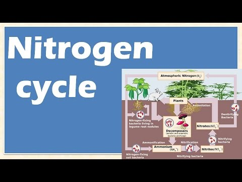 Environment and ecology: Nitrogen cycle: Nitrosomonas, Nictrobactor  : Learn Online