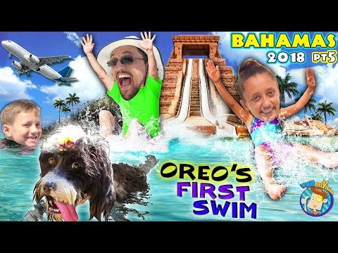 ANGRY SOGGY DOGGY SWIMMING + BAHAMAS ATLANTIS LEAP OF FAITH SHARK WATERSLIDE (FUNnel Vision Vlog)