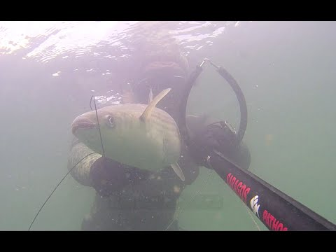 Spearfishing In North Wales Vol.2