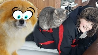 Сказка для говорящего кота Макса и Собаки Алисы