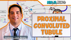 hqdefault - Proximal Convoluted Tubule Of A Kidney Nephron