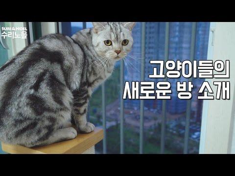 수리노을이네 고양이들 방 소개 [SURI&NOEL]