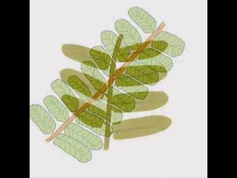 Late Carboniferous Period Plants Slideshow
