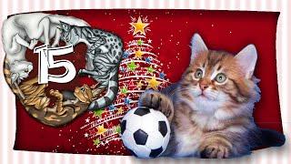Fußball mit Katzen - Miauender Adventskalender - Tag 15 - mit Miri