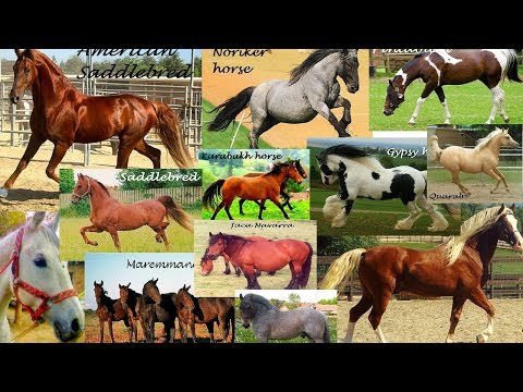TOP 20 MOST POPULAR HORSE BREEDS IN THE WORLD