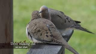 Spring Birds 2019