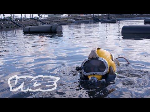 Trending HQ - Meet A Professional Sewage Diver