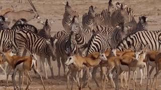 Namib - Leben am Limit, TRAILER