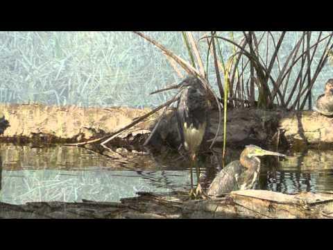 Florida Birds & Wildlife - 2012 HD