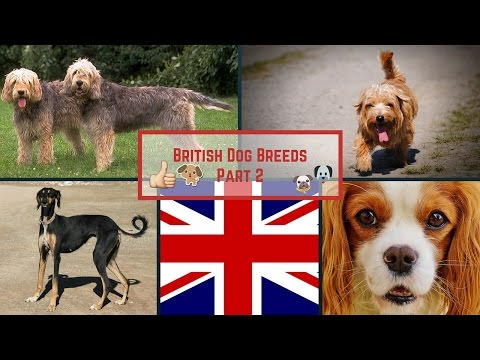 British Dog Breeds Part 2