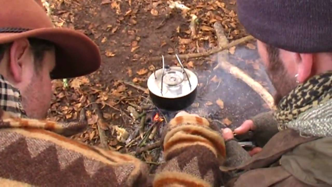 How to Look After a Pet Woodlouse How to Look After a Pet Woodlouse new picture