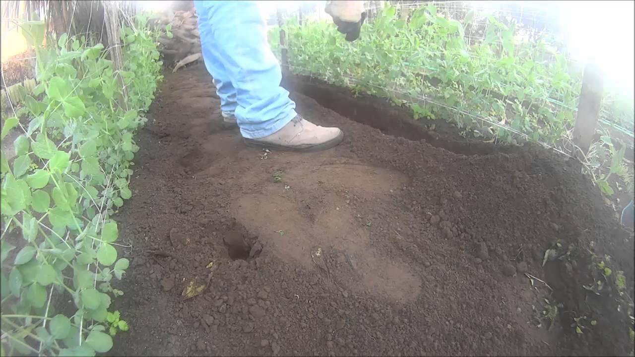 Cenere Di Pellet Nell Orto come concimare l'orto con lo stallatico pellettato