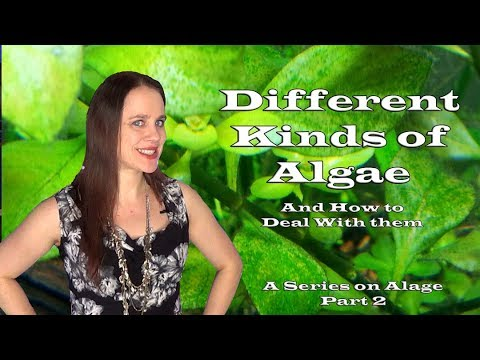 THE DIFFERENT KINDS OF ALGAE IN A FRESHWATER AQUARIUM - A Series on Algae - Part 2