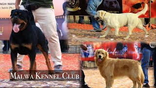 Malwa Kennel Club | All Breed And Rottweilers Speciality Dog Show 2021 | Full Dog Show Coverage
