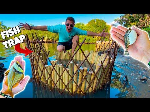 BAMBOO FISH TRAP Catches EXOTIC AQUARIUM FISH!