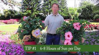 3 Easy Tips for Growing Tropic Escape® Hibiscus