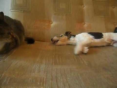 Собаки во Владивостоке, продажа с фото, цены