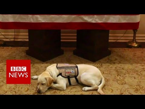 What President Bush's dog Sully did next - BBC News