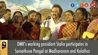 DMK's working president Stalin participates in Samathuva Pongal at Madhavaram and Kolathur