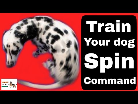 Dog SPIN training || How to train your dog spin || tips and tricks ||