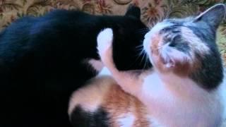 кот и кошка умываются