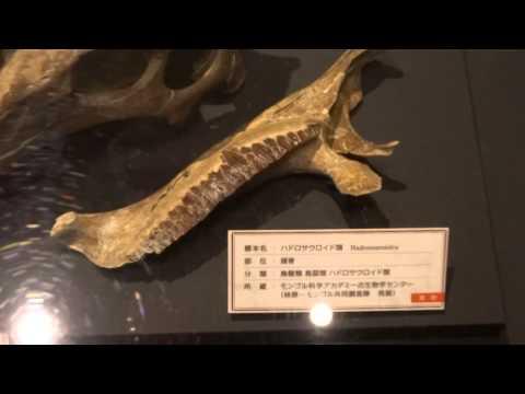 ハドロサウロイド類  Hadrosauroidea:「大恐竜展」ゴビ砂漠の驚異