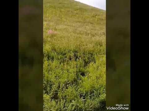 Кладезь здоровья и силы трава эспарцет