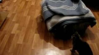 Кошка и скотч
