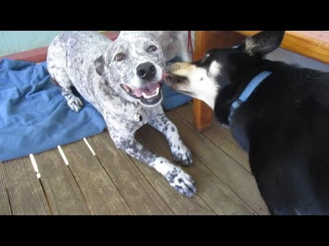 dogs socialising - dog breed mixes