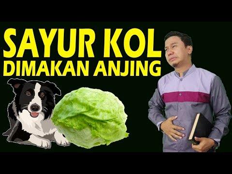 SAYUR KOL - VERSI ISLAMI BALASAN LAGU ( Parody )