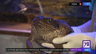 Зверское утро: жаба ага